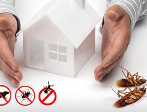 Call now: 01717958596 | Pest Control & Life Style Dhaka, Bangladesh