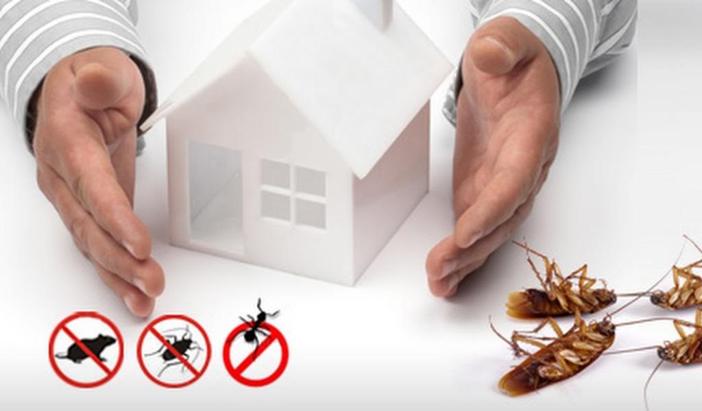 Pest Control & Life Style | Dhaka, Bangladesh