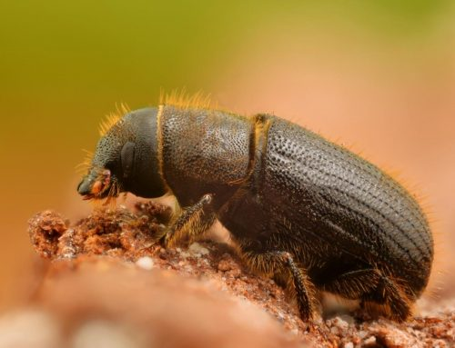 Bark beetle treatment – Pest control service Dhaka I Call now: 01717958596