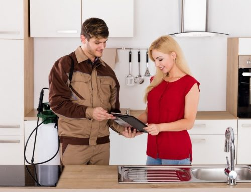 Pest control services in Dhaka – Helpline: 01717958596