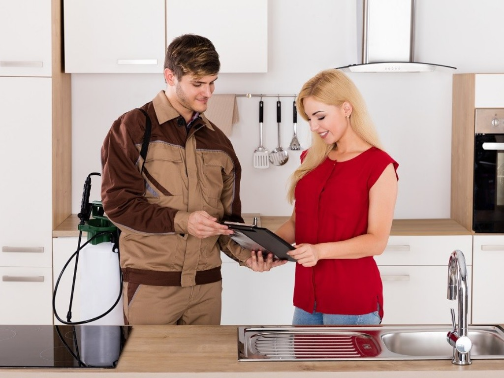 Pest control services in Dhaka - Helpline 01711-876331